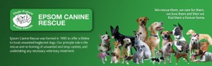 Recycle Empty printer Ink Cartridges for Epsom Canine Rescue